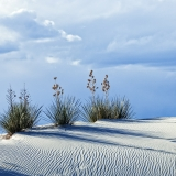 White Sands Landscape, White Sands National Monument, New Mexico